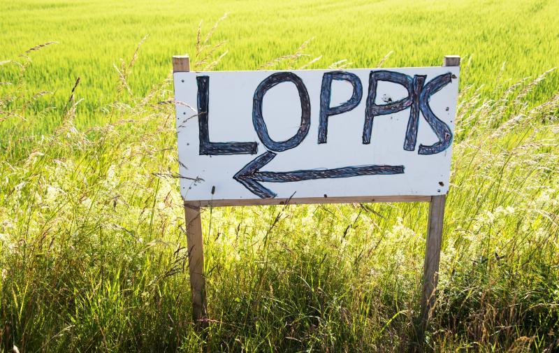 Auktion och loppis i Liljedal